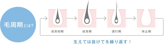 毛周期のイメージ